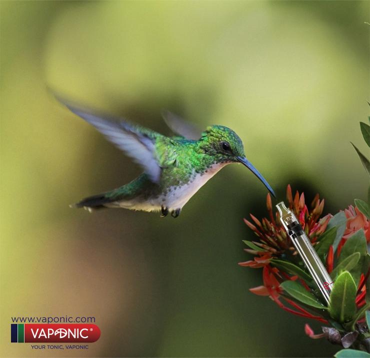 colibri cartel sin letras