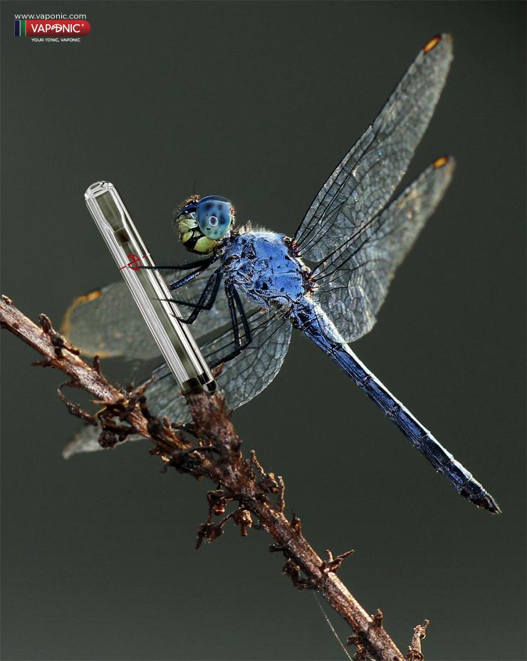 libelula azul vaponic
