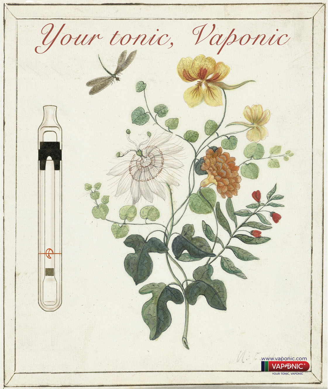 ilustracion botanica Vaponic