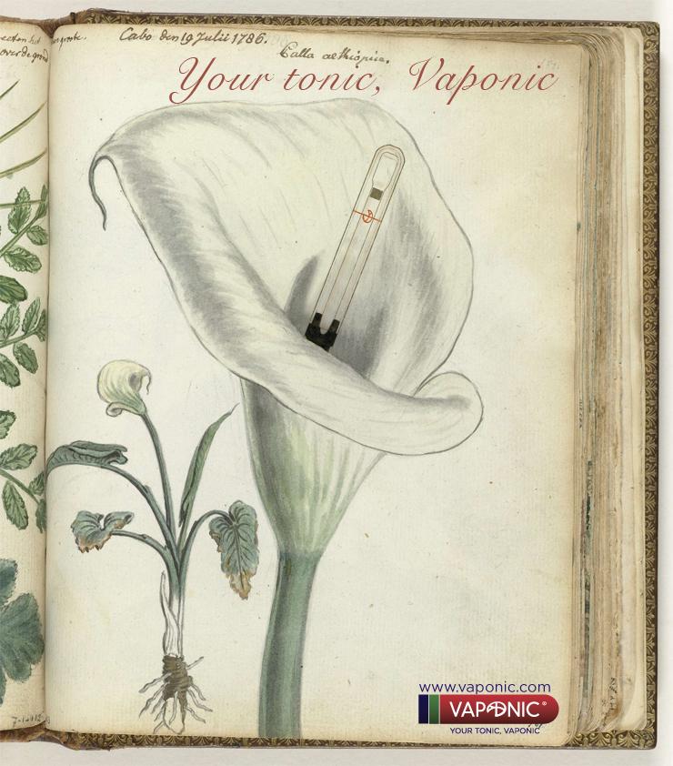 ilustracion botanica Vaponic 2